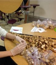Counting sunchokes at our school's CSA